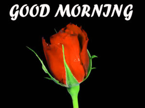 Beautiful Flower Good Morning Wishes Images HD Download