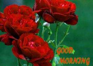 Beautiful Flower Good Morning Wishes Images Pics With Red Rose