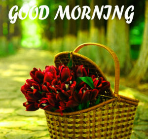 Beautiful Flower Good Morning Wishes Images Photo for Wife