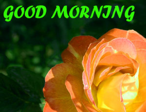 Beautiful Flower Good Morning Wishes Images Pics Wallpaper Download