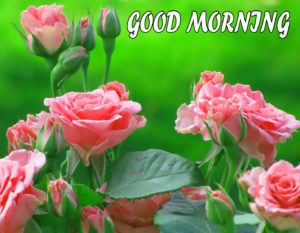 Beautiful Flower Good Morning Wishes Images Wallpaper Download