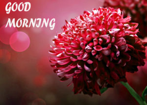 Beautiful Flower Good Morning Wishes Images Wallpaper Pictures