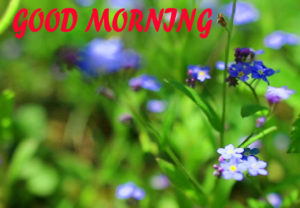 Beautiful Flower Good Morning Wishes Images Pics Wallpaper Free