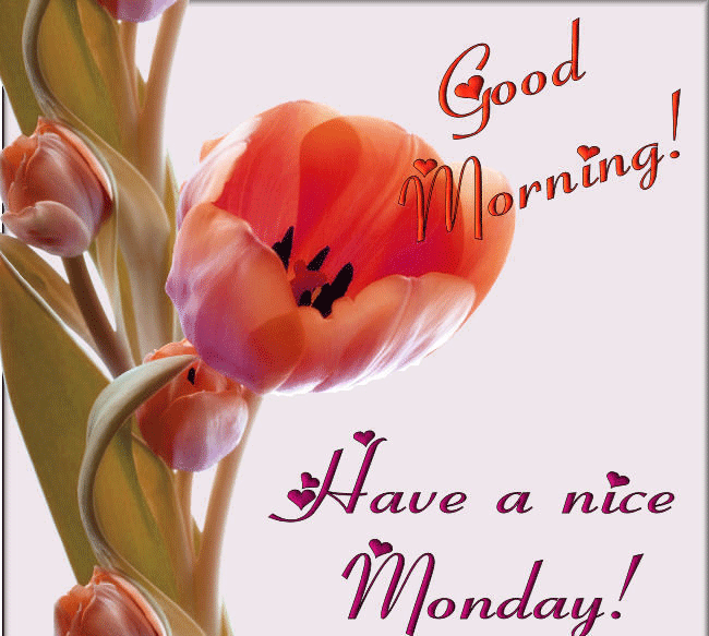 monday morning wishes Images Photo Pics Wallpaper HD Download