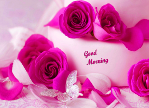 new love gud morning Images Photo Pictures HD Download