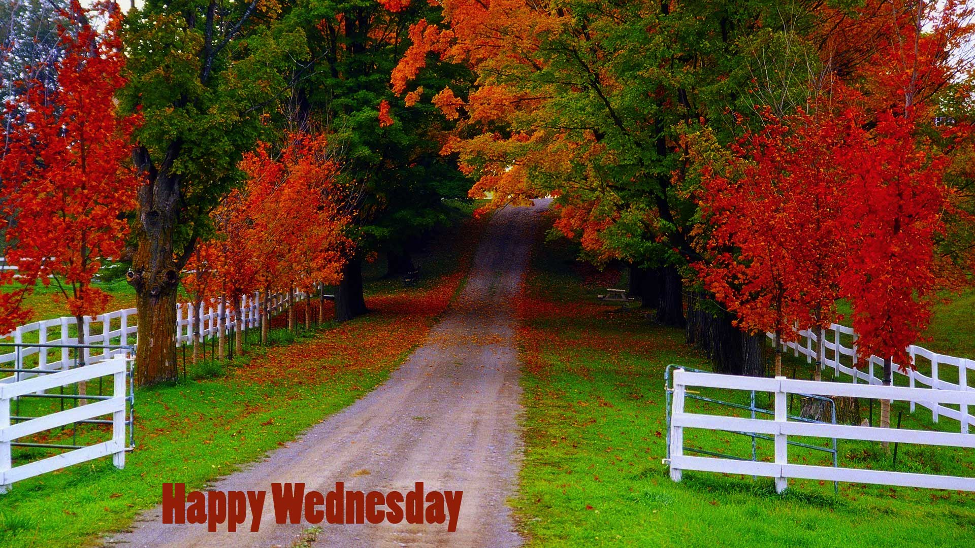 good morning wednesday pictures
