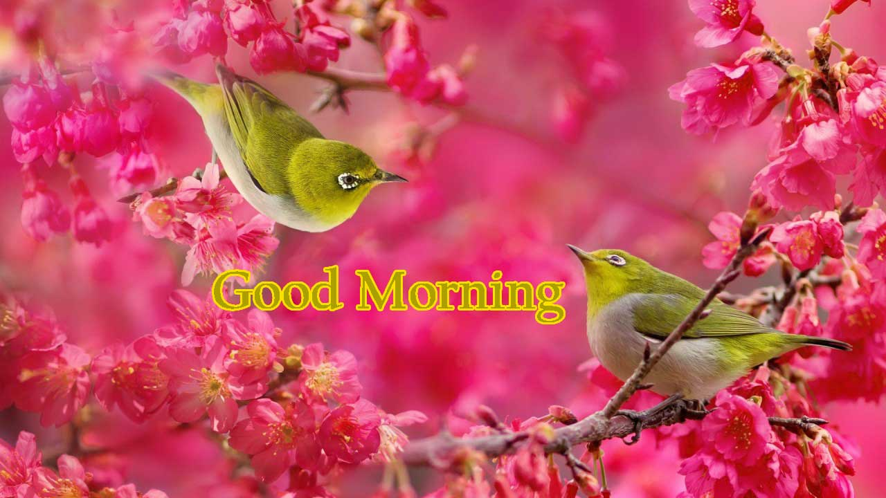 Good Morning Flowers Images Photo Pics Wallpaper Pictures HD Download for Whatsaap