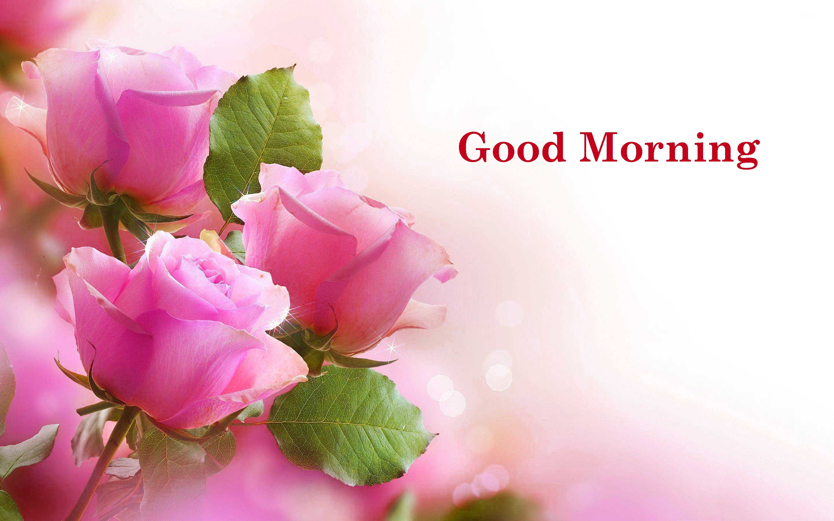 flower good morning Images Wallpaper Pictures Photo Pics HD Download For Whatsaap