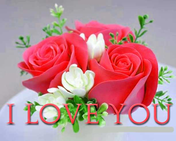 I Love You Images Pics Photo Pictures Wallpaper With Red Rose HD Download For Whatsaap