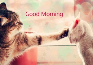 cute-funny-love good morning wallpaper