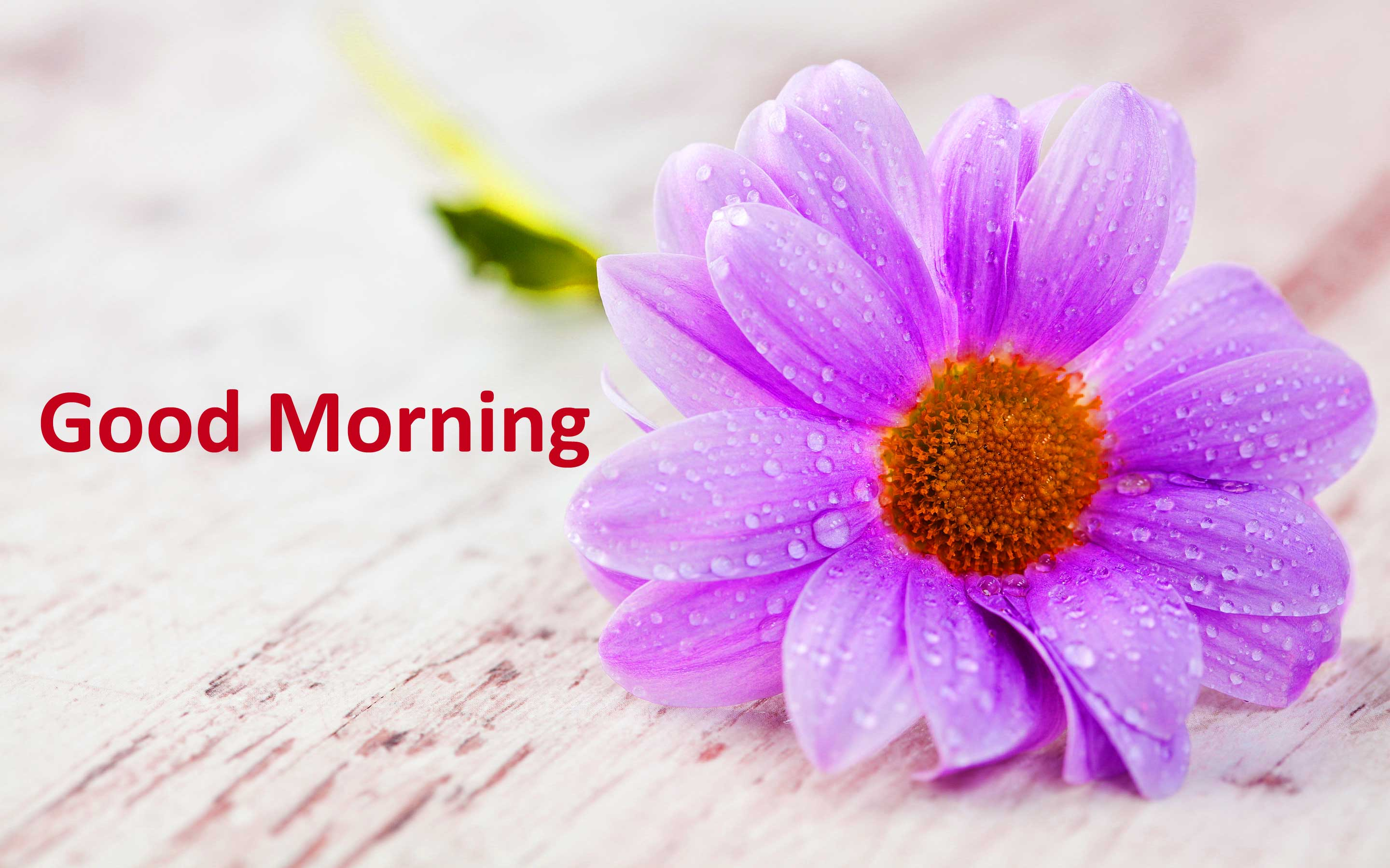 good morning images Photo Pictures Wallpaper hd for lover HD Download