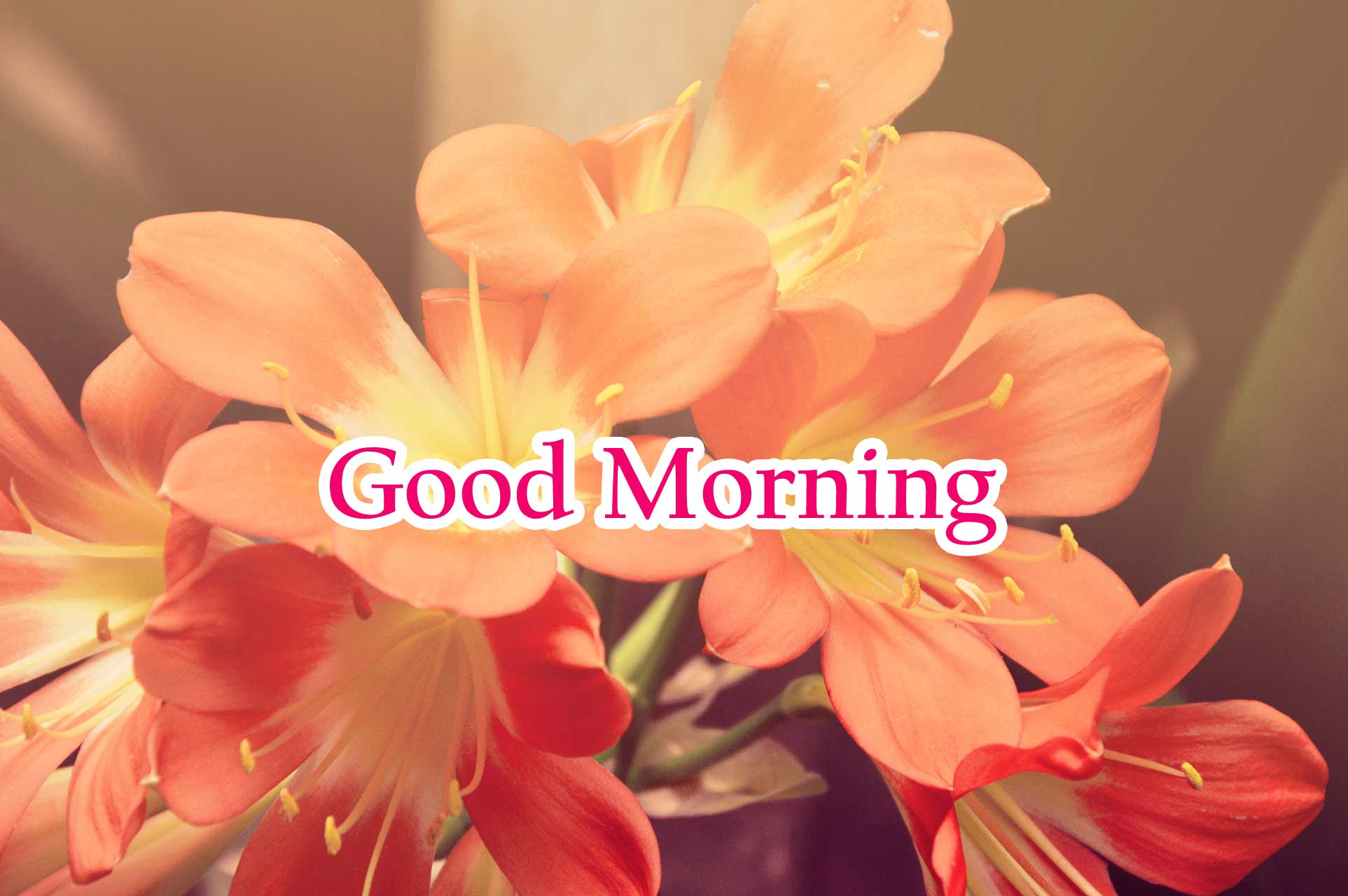 flowers good morning Images Photo Pics Wallpaper HD Download For Whatsaaap