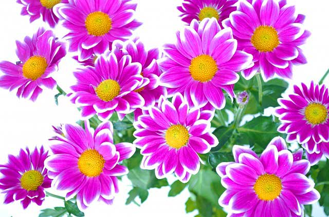 New flower photography Images Pics HD Download