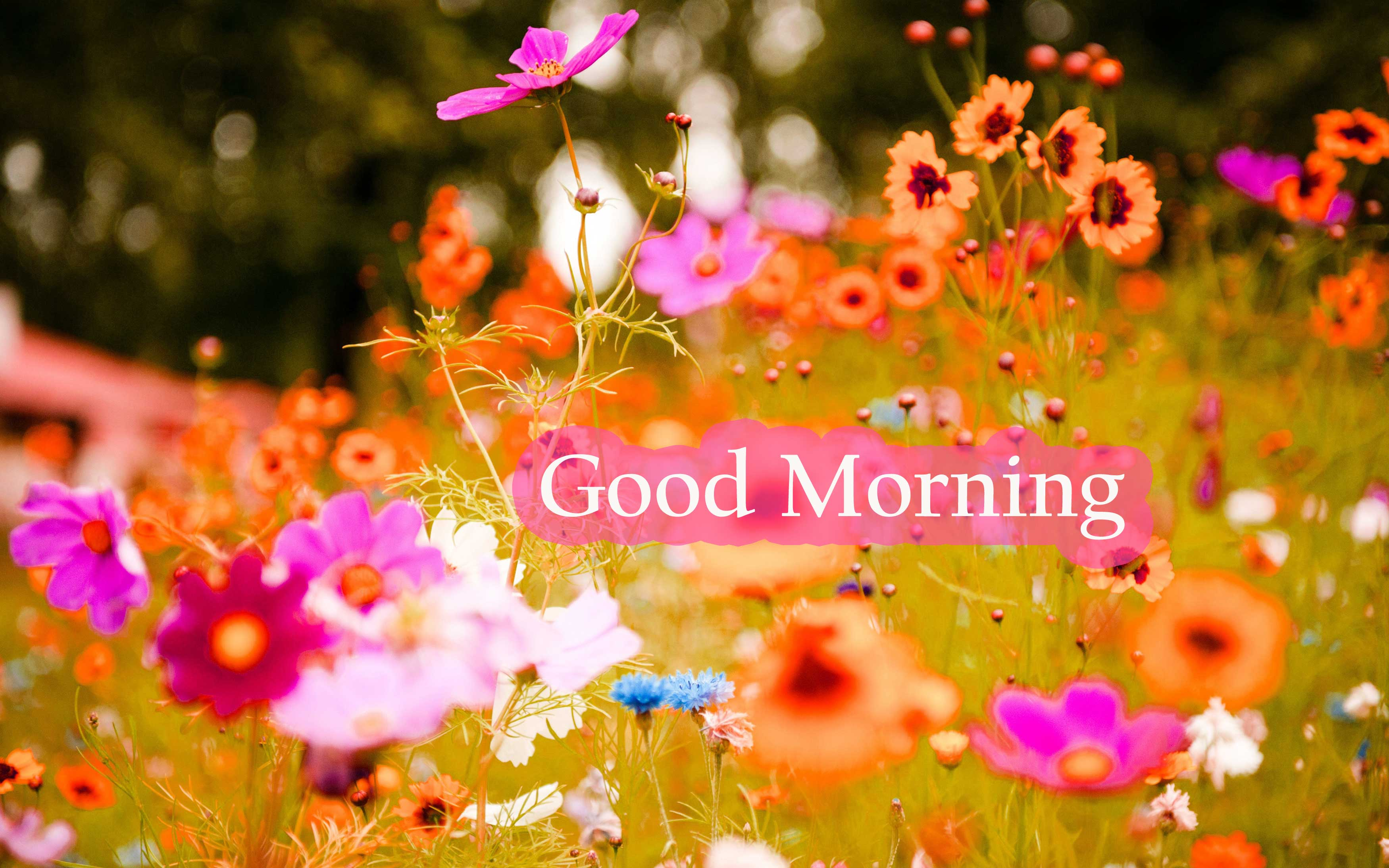 flowers good morning Images Wallpaper Photo Pictures HD