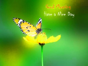 Nature Good Morning Picture Download for Whatsaap