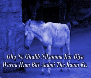 Hindi funny shayari images Photo Wallpaper Pics Pictures Free HD free Download For Whatsaap