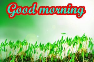 Good Morning Nice Pic Images Pictures Download