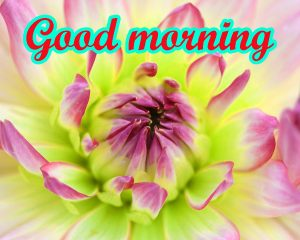 Good Morning All images Wallpaper Pics With Flower