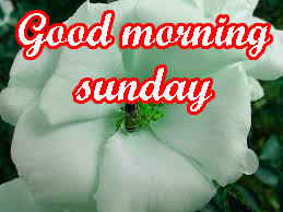 Sunday Good Morning Images Pictures Free Download