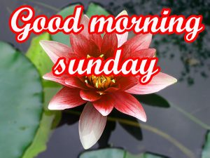 Flower Sunday Good Morning Images Pics
