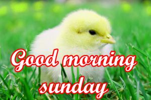 Sunday Good Morning Images Wallpaper HD Download