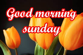 Sunday Good Morning Images Wallpaper pics HD