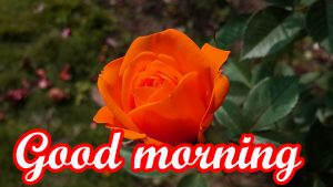 Very Nice Good Morning Images Photo PICS
