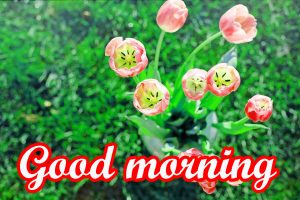 Very Nice Good Morning Images Pictures Free Download