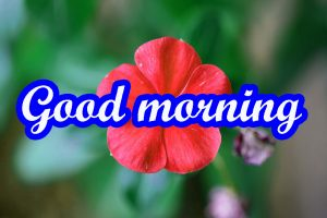 Very Nice Good Morning Images HD Free Download