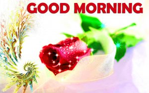 Good Morning Images Wallpaper Photo Download With Rose