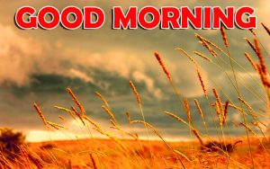 Good Morning Images Wallpaper HD Download for Lover