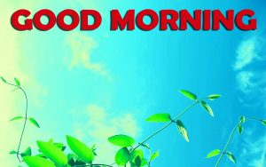 Good Morning Wishes Images Wallpaper HD Download For Boyfriends