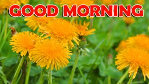 Good Morning Wishes Images Wallpaper Photo HD Download