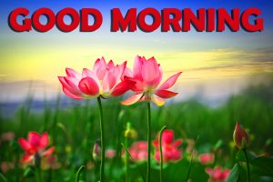 Good Morning Wishes Images Photo Pictures With Flower