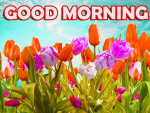 Good Morning Wishes Images Photo Wallpaper HD Download