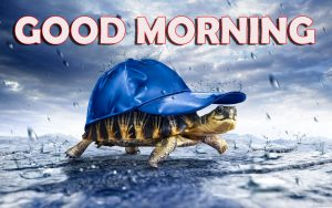 Good Morning Wishes Images Wallpaper Pictures for Boyfriend