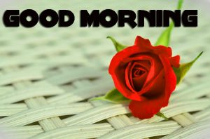 Red Rose Romantic Good Morning Images Wallpaper Pics Download