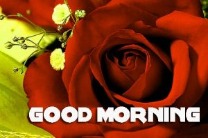 Red Rose Romantic Good Morning Wishes Images Wallpaper Pics Download