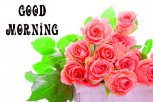 Good Morning Images Wallpaper Pictures With Red Rose