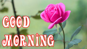 Good Day Wishes Images With Flower