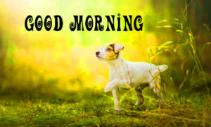 Good Morning Images for Puppy Lovers Wallpaper Pics Download