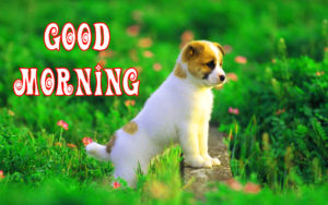 Good Morning Images for Puppy Lovers Wallpaper Pic Download