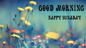 Sunday Good Morning Images Wallpaper Photo Pic
