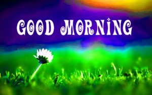 Very Beautiful Good Morning Images Pictures photo Download