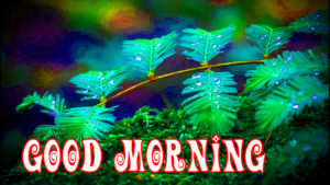Very Nice Good Morning Images Pics Wallpaper Download