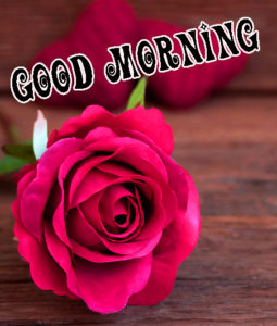 Red Rose Good Morning Images  Wallpaper Pictures for Facebook