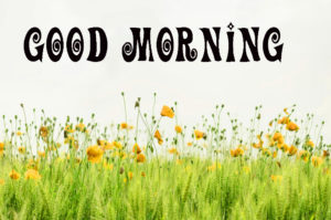 Flowers Good Morning Images Wallpaper Pics for Facebook