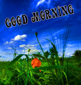 Nature Good Morning Images Pictures Wallpaper Dow load