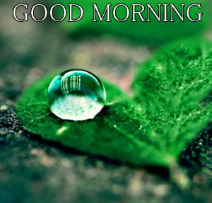 Beautiful New Cute Good Morning Images Pictures