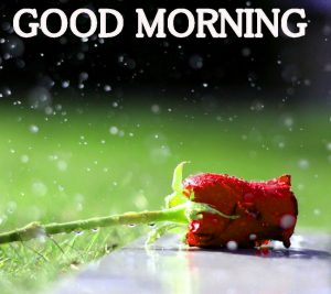 Beautiful New Cute Good Morning Images Wallpaper Pic Download